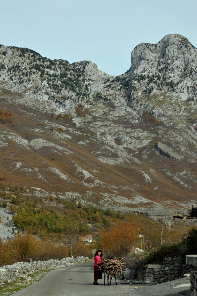 Droga do Boge i pierwszy osiołek w Albani